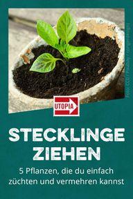 Stecklinge ziehen: 5 Pflanzen, die du einfach züchten und vermehren kannst