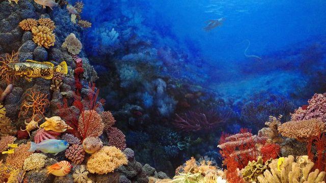 Versauerung der Meere, Korallen
