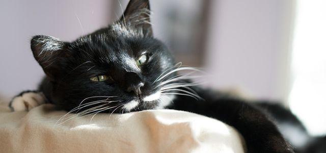 Katze Entwurmen Das Solltest Du Beachten Utopia De