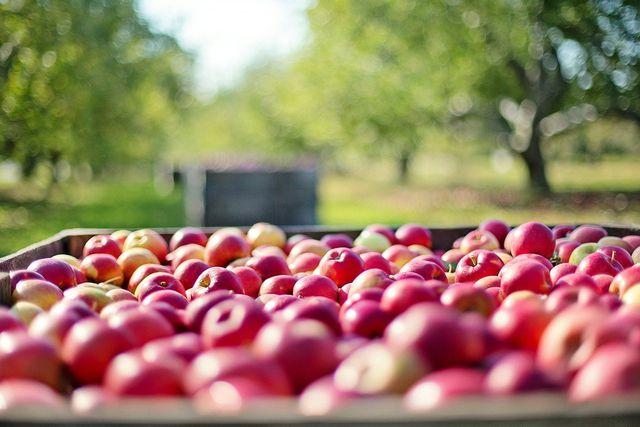 Verwende für den Apfelauflauf nur Zutaten in Bio-Qualität.