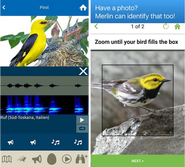 Vogelstimmen kannst du mit Smartphone-Apps erkennen.
