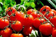 Eingelegte Tomaten bringen ein Stück Sommer in die Küche.