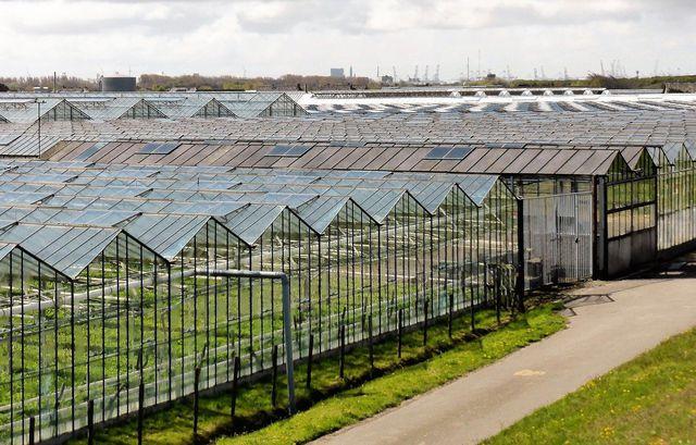 Regionales Gemüse verbraucht weniger Energie und Wasser als Gemüse aus dem Gewächshaus.