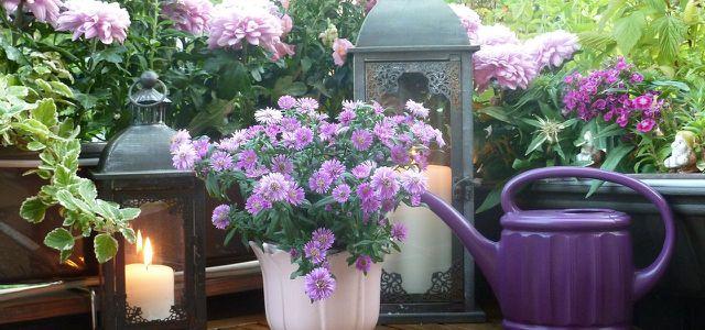 Balkonpflanzen Pflegeleichte Sorten Fur Sonnige Und Schattige