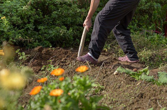 Garten umgraben mit dem Spaten.