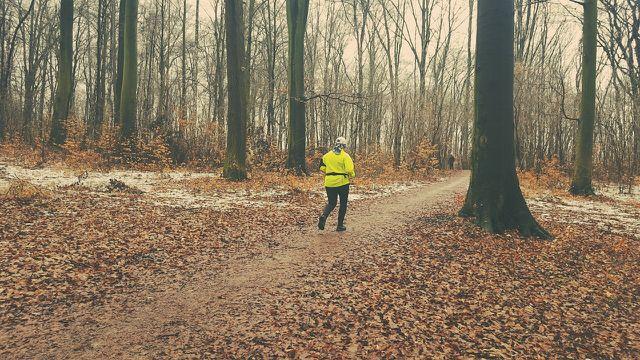Auch im Winter wirkt ein Waldspaziergang wie Medizin für den Kreislauf.