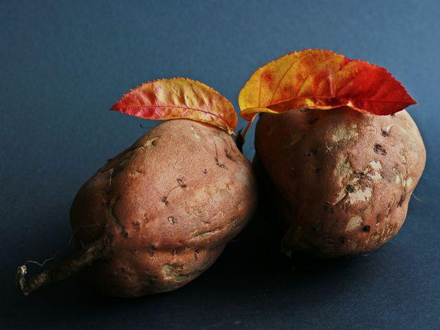 Der richtige Zeitpunkt zur Süßkartoffel-Ernte ist gekommen, wenn die Blätter sich gelb verfärben.