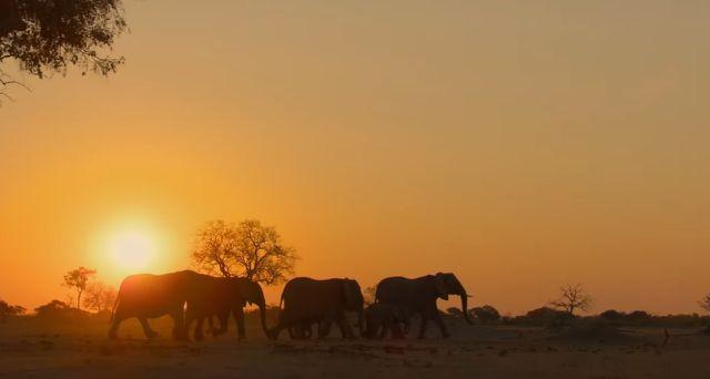 """Elefanten"" bei Disney Plus"