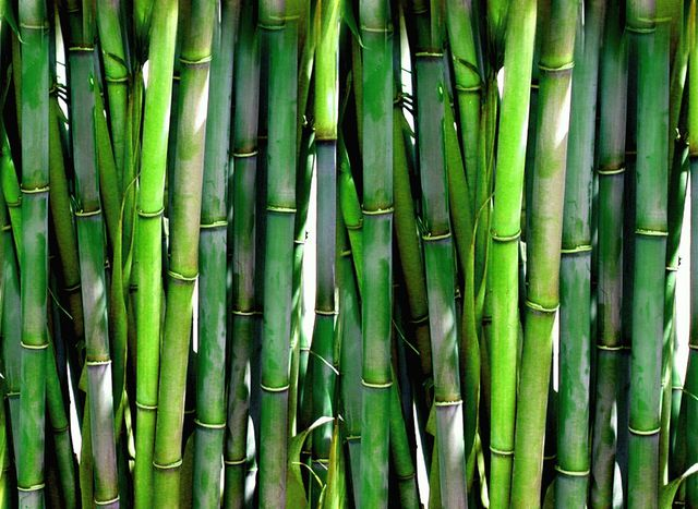 Ein häufiger Zusatstoff ist Bambuskohle, die aus China kommt.