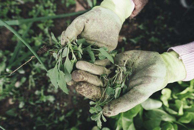 Subsistenz in der Landwirtschaft bedeutet: Lebensmittel selber anbauen.