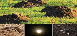 How to get rid of moles in yard home remedy