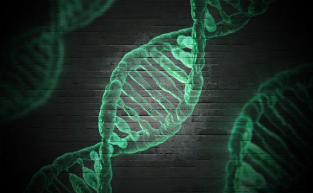Gentechnik greift gezielt in die DNA von Lebewesen ein