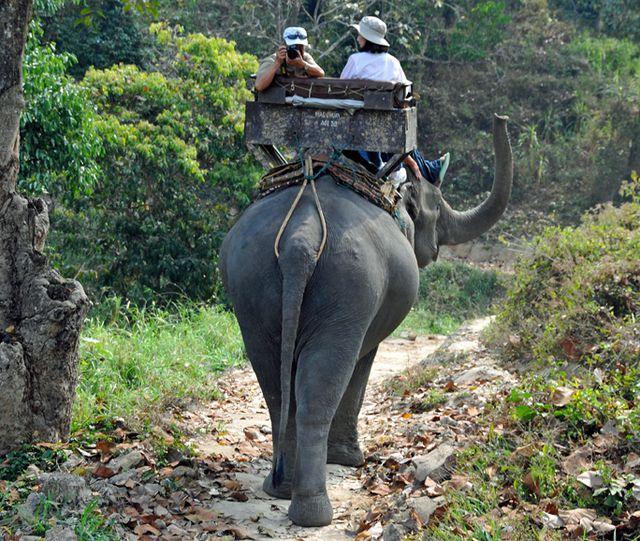 Elefanten reiten Touristenattraktion Tiere leiden