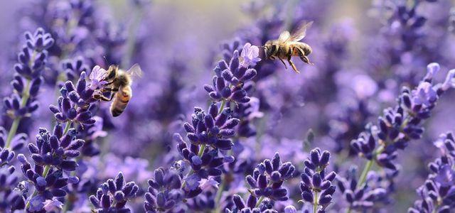 Bienenfreundliche Pflanzen Die Besten Ideen Für Garten Und Balkon