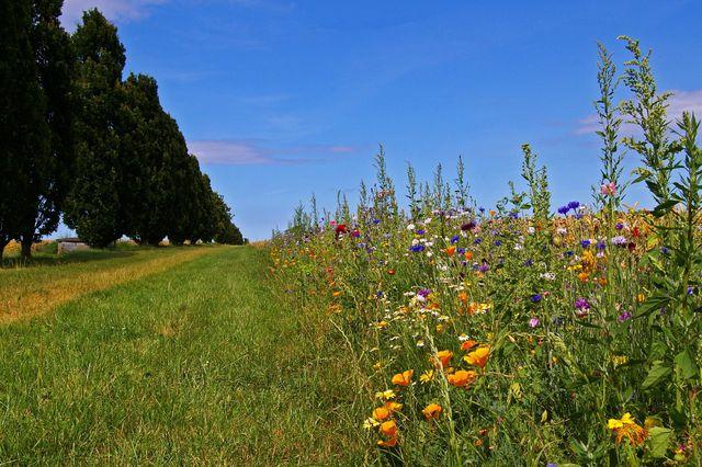 Für Blühstreifen in der Landwirtschaft gibt es Fördermittel.