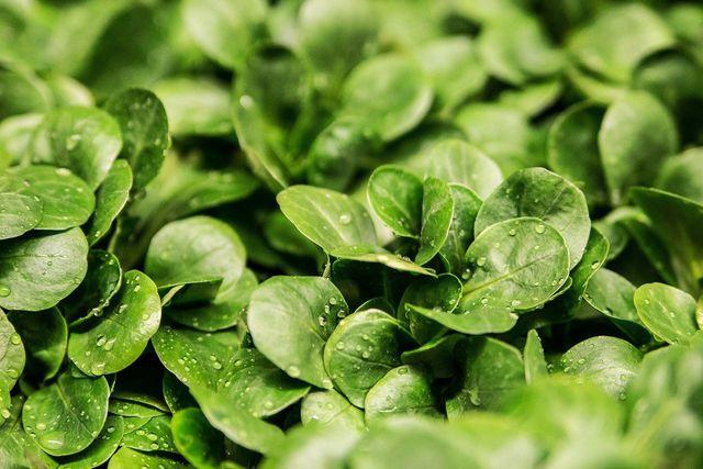 Feldsalat versorgt dich unter anderem mit Vitamin B9.