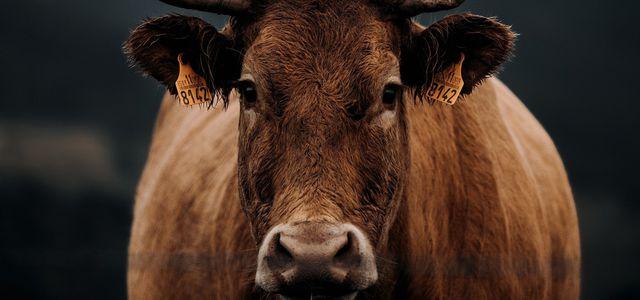 Richard David Precht über Tierethik: Was wir mit den Tieren machen ist völlig falsch