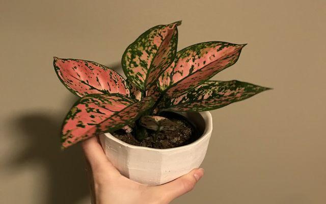 non-toxic houseplants