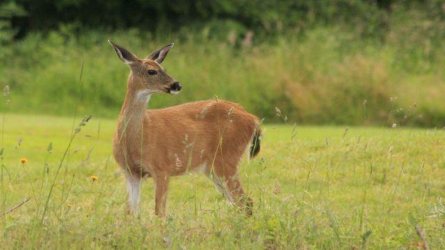 Der NABU engagiert sich als Hilfsorganisation für den Schutz der Natur.