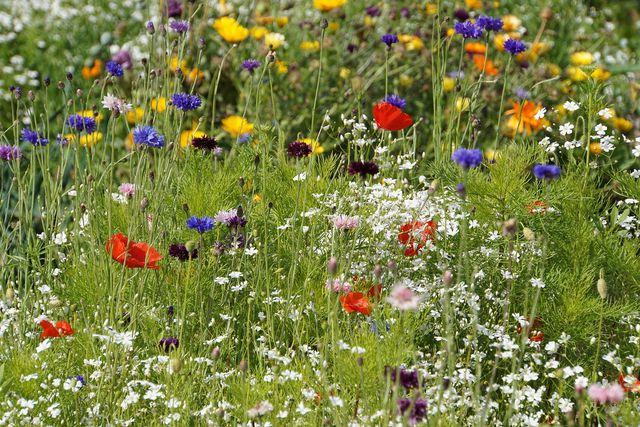 Indem du bienenfreundliche Blumen pflanzt, gibst du Bienen Nahrung
