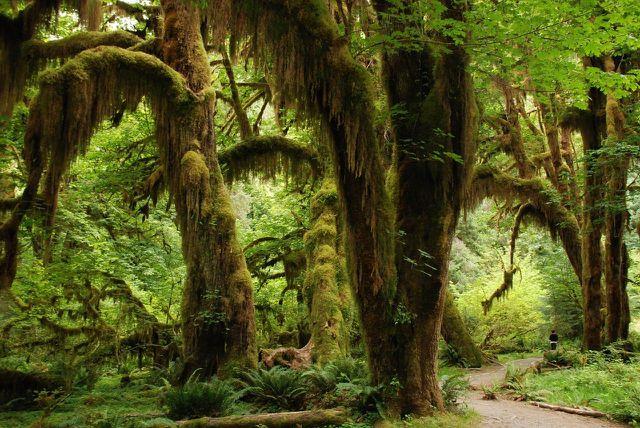Jede Minute fallen 30 Fußballfelder an Regenwaldfläche der Abholzung zum Opfer.