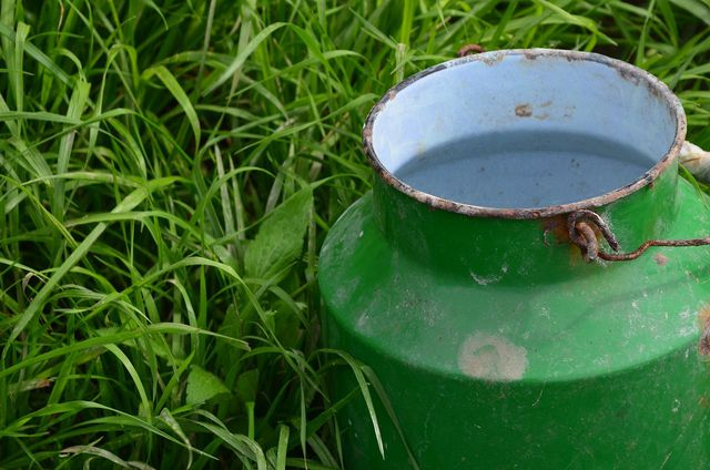 Als Milchgrundlage für Kefir immer Bio-Milch verwenden.