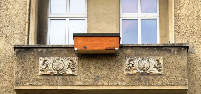 Bienenbox Imkern Balkon