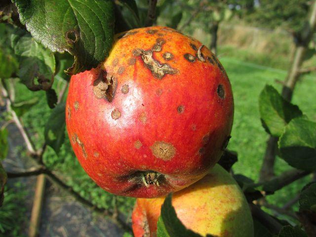 Fungizide wirken gegen Pilzbefall.