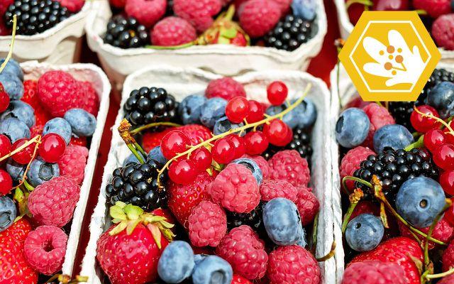 bee extinction berries