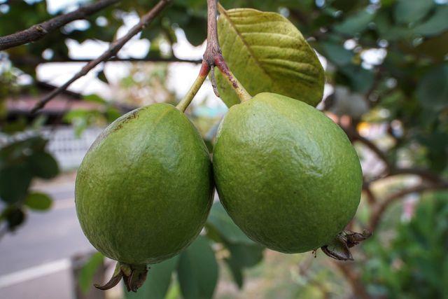 Guaven: Wenig Zucker, viele Mineralsoffe - aber leider eine schlechte Ökobilanz.