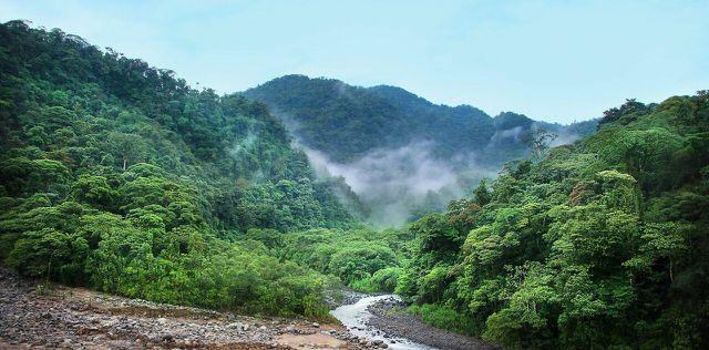 Die großen Verluste von Waldflächen tragen mit zum Klimawandel bei.
