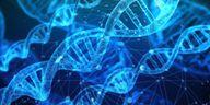 Purine sind Bausteine der DNA.