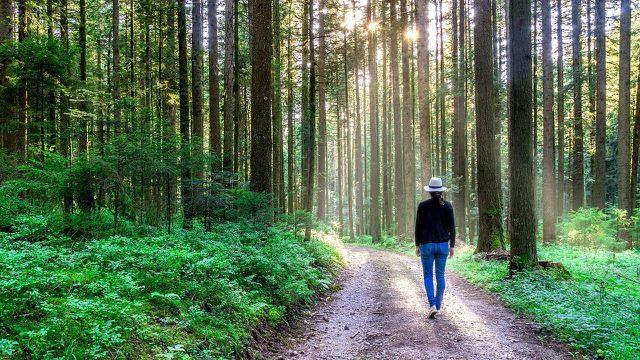 Mit regelmäßigen Spaziergängen kannst du gegen Wetterfühligkeit vorgehen.