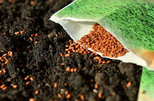Verteile die Samen großzügig.