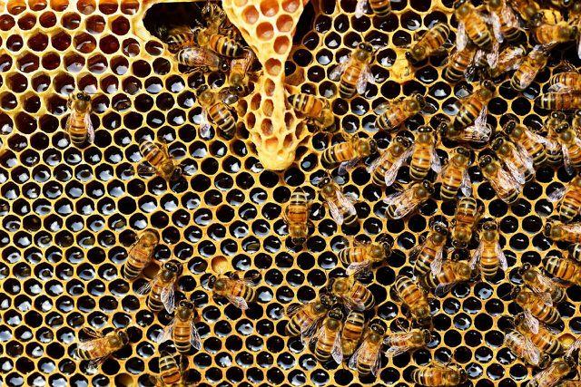 Ein Bienenvolk ist eine Art Superorganismus mit einer konstanten Temperatur,