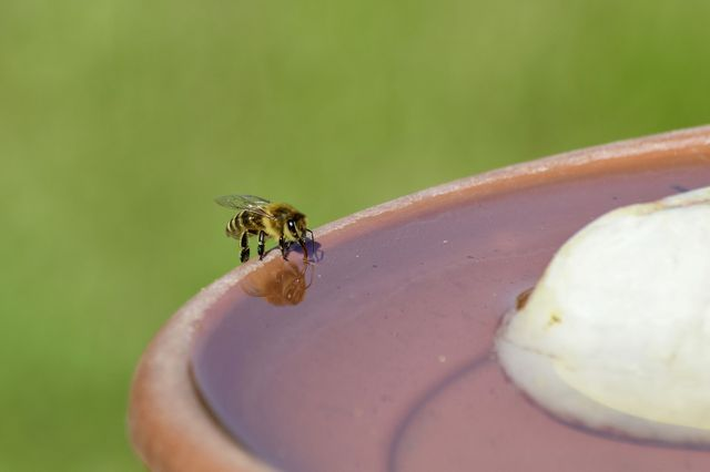Bees need water just like us – help them out with a bee waterer