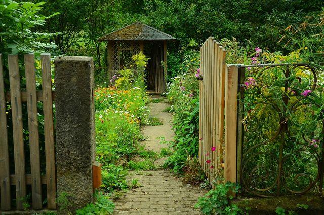 Wenn du einen Garten mit viel Platz hast, kannst du Wermut auch selber anpflanzen.