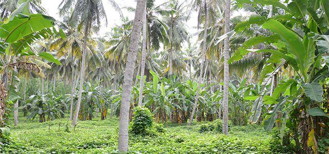 Rapunzel Kokosöl fair nachhaltig bio