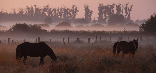 Morgenlandschaft im Naturpark TERRA.vita