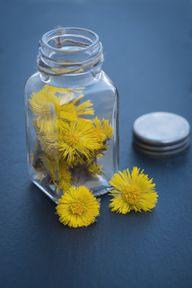 Im Schraubglas kannst du aus Huflattichblüten und Honig einen Hustensirup herstellen