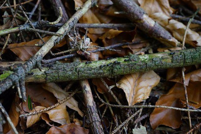 Mit Totholz kannst du auf simple Weise dein eigenes Gartenbiotop anlegen.
