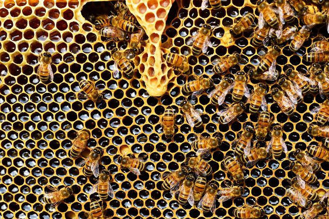 Mit Bio-Honig unterstützt du eine artgerechte Bienen-Haltung.