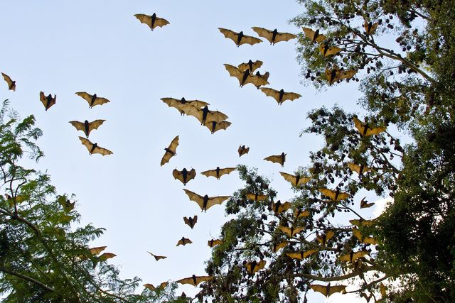 Fledermäuse sind sehr nützliche Tiere, ab und zu verirrt sich auch einmal eine Fledermaus im Haus.