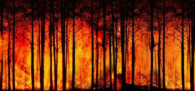 Extreme Hitze in Kanada sorgt für Hitzetote und Brände.