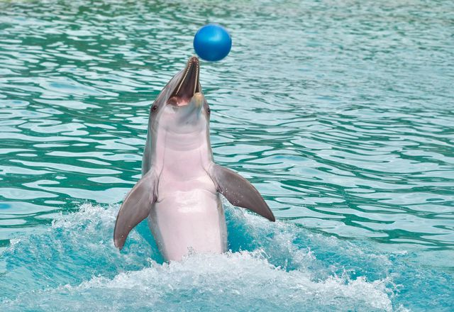 Delfine in engen Becken zu halten, ist seit langem umstritten.