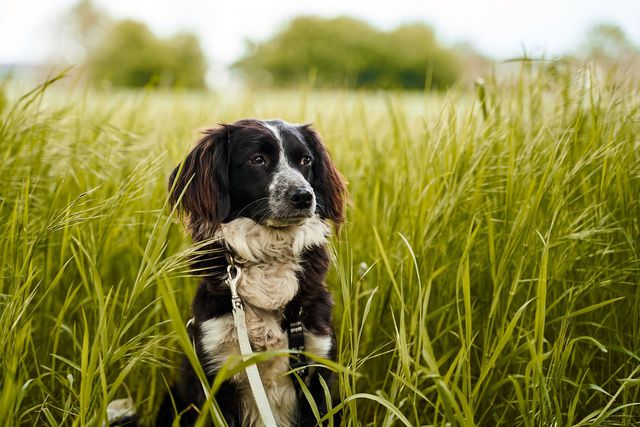 tick protection for dogs