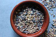 In herrkömmlichen Körnervogelfutter ist bereits Ambrosia, eine hochallergen Pflanze aufgetaucht