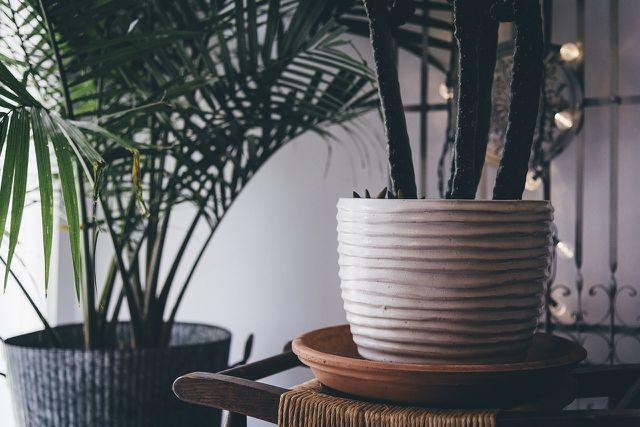 Zimmerpflanzen Bei Wenig Licht Diese 5 Wachsen Im Schatten Utopiade