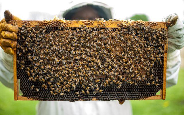 Fairtrade-Honig ist eine gute Alternative