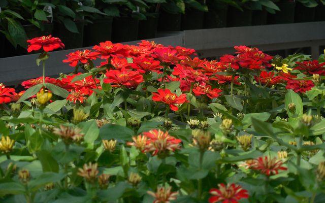Garten-Fehler: Billig-Blumen, Baumarkt-Blumen